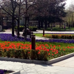 Bulgaria Sofia Tulips in front of the National Palace of Culture3